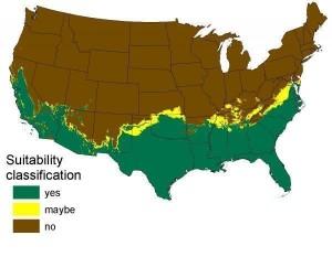 Pythons in America